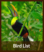 Thumbnails_bird_list