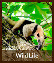 Thumbnails_wildlife